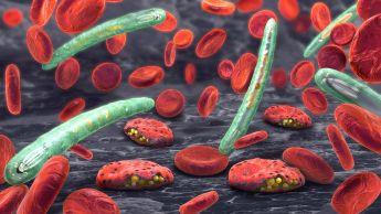 Satt actualité : SEAPAL : De nouveaux composés pour combattre le paludisme